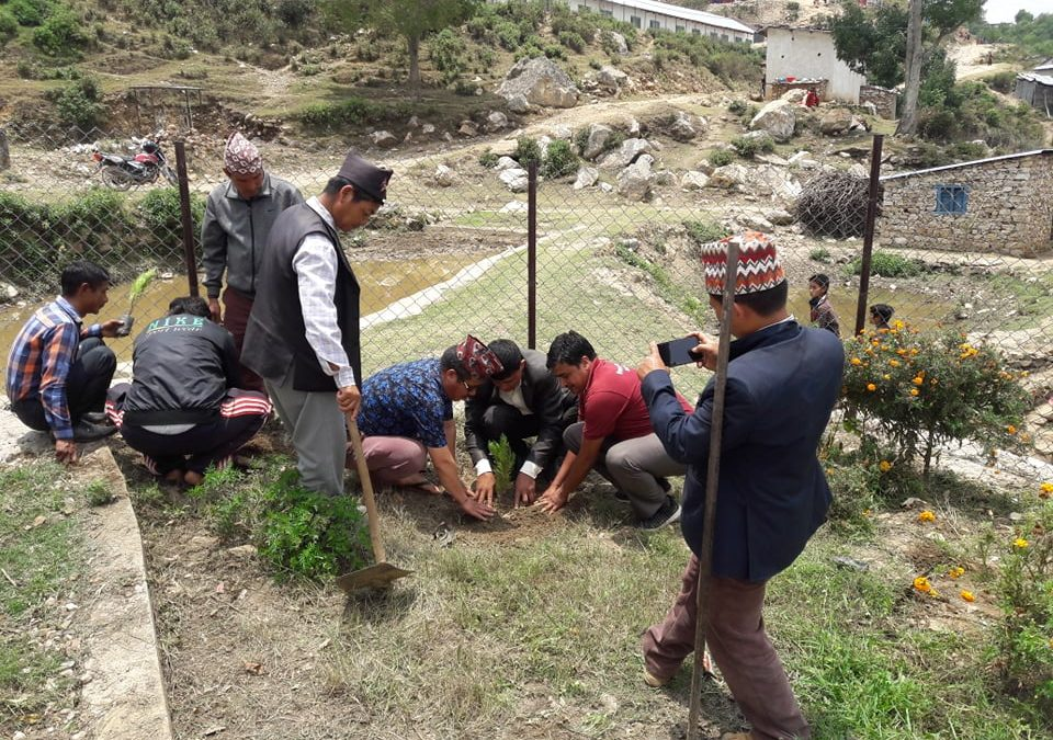 Environment Day Celebrated