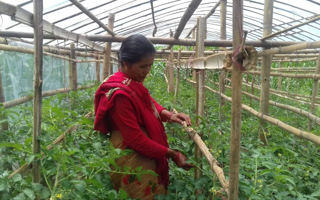 Generating Opportunities in Agriculture and Livelihoods (GOAL-II) Project